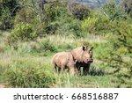 white rhinoceros  ... | Shutterstock . vector #668516887