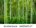 Bamboo Forest Of Arashiyama...