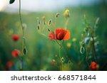 flowers  field of poppies ... | Shutterstock . vector #668571844
