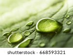 Stock photo large beautiful drops of transparent rain water on a green leaf macro drops of dew in the morning 668593321