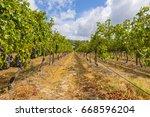 grape wineyard in paarl  south... | Shutterstock . vector #668596204
