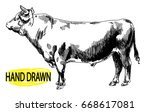 Big Young Bull. Cow. Drawing B...