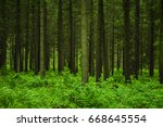 forest in the summer | Shutterstock . vector #668645554
