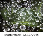 Beautiful Spider Web With...