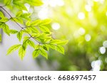 green leaves are beautiful... | Shutterstock . vector #668697457