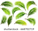 palm leaves isolated on white.... | Shutterstock .eps vector #668702719