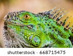 aggressive green iguana with... | Shutterstock . vector #668715475