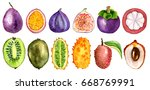 tropical fruit slice watercolor ... | Shutterstock . vector #668769991