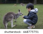 child feeding baby kangaroo in... | Shutterstock . vector #668775751
