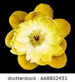 peony flower yellow on the... | Shutterstock . vector #668802451