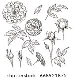 set of elements. hand drawn... | Shutterstock . vector #668921875