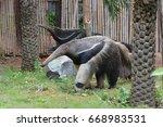 giant anteater | Shutterstock . vector #668983531