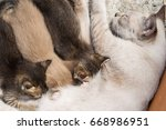 the cute kitten is eating... | Shutterstock . vector #668986951