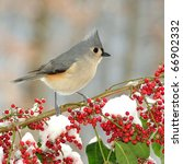 A Tufted Titmouse  Parus...