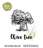 olive tree with ladder hand... | Shutterstock .eps vector #669102661