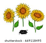 sunflower flower vector drawing ... | Shutterstock .eps vector #669118495