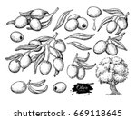 olive set. hand drawn vector... | Shutterstock .eps vector #669118645