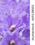 beautiful charming light violet ...   Shutterstock . vector #669138001