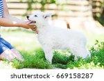 Puppy White Shepherd Dogs...