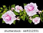 Stock photo seamless pattern garland of delicate beautiful pink roses on long stems horizontal floral border 669212551