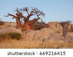 baobab  lekhubu island | Shutterstock . vector #669216415