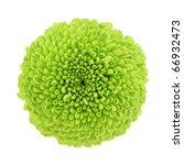 Macro Of A Green Chrysanthemum...
