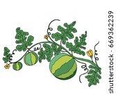 cartoon watermelon in foliage... | Shutterstock .eps vector #669362239