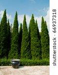 pine forest 03   Shutterstock . vector #66937318