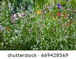 matthiola and other small...   Shutterstock . vector #669428569