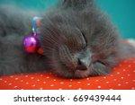 cat and kitten | Shutterstock . vector #669439444