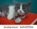 cat and kitten | Shutterstock . vector #669439504