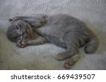 cat and kitten | Shutterstock . vector #669439507