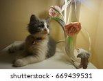 cat and kitten | Shutterstock . vector #669439531