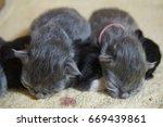 cat and kitten | Shutterstock . vector #669439861