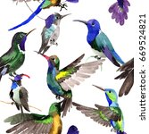 sky bird colibri  pattern in a... | Shutterstock . vector #669524821