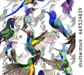 sky bird colibri  pattern in a... | Shutterstock . vector #669524839