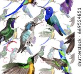 sky bird colibri  pattern in a... | Shutterstock . vector #669524851