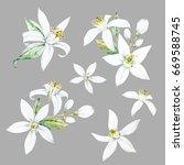 watercolor flower bergamot ... | Shutterstock . vector #669588745