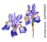 Watercolor Hand Painted Iris...