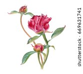 Stock photo watercolor hand painted pink flowers can be used as romantic background for web pages wedding 669631741