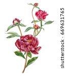 watercolor hand painted pink... | Shutterstock . vector #669631765