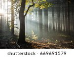 sunbeams in a foggy forest in... | Shutterstock . vector #669691579