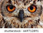 Stock photo owl look 669712891
