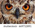 owl look | Shutterstock . vector #669712891