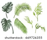 set green leaves of tropical... | Shutterstock .eps vector #669726355