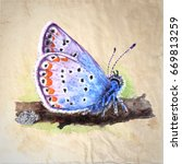 copper butterfly  lycaenidae ... | Shutterstock . vector #669813259