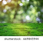 green moss shining in the rays...   Shutterstock . vector #669845944
