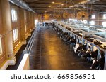 many cows on a dairy farm. milk ... | Shutterstock . vector #669856951
