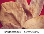 dry leaves on red background | Shutterstock . vector #669903847