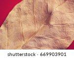 dry leaf | Shutterstock . vector #669903901